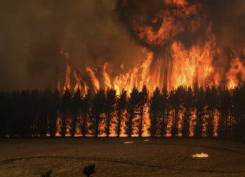 Raging destruction -- Countless acres of forest in Australia are destroyed in a fire. Australia experienced rapidly growing wildfires throughout the months of December and January.